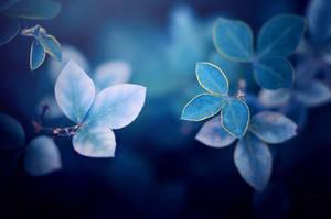 blue by ajkabajka