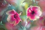 Beauty of Hibiscus