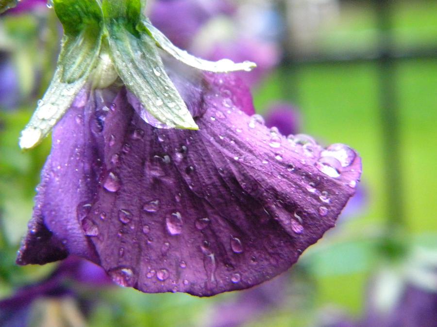 Shyness In the Rain by Demi-Plum