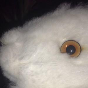 datemate's Profile Picture