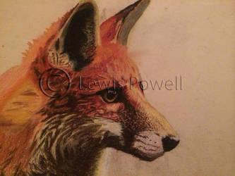 Fox Pastel Pencil by LewisPowell