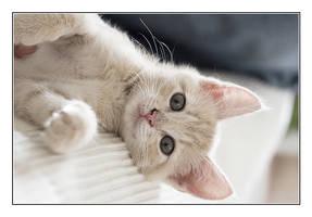 Kitten by Yaninah