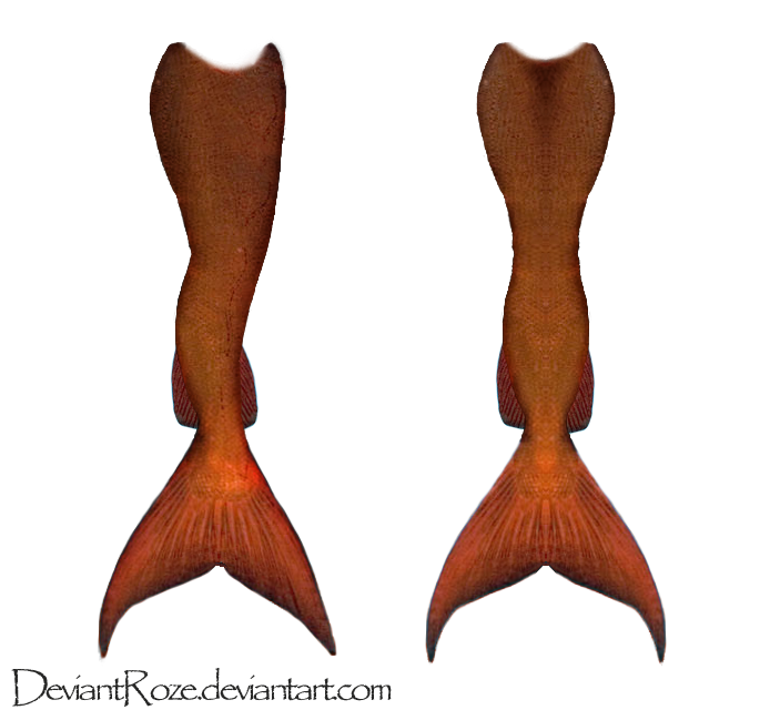 Go Back gt Gallery For Orange Mermaid Tails