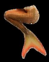 Mermaid Tail 12 (Orange) by DeviantRoze