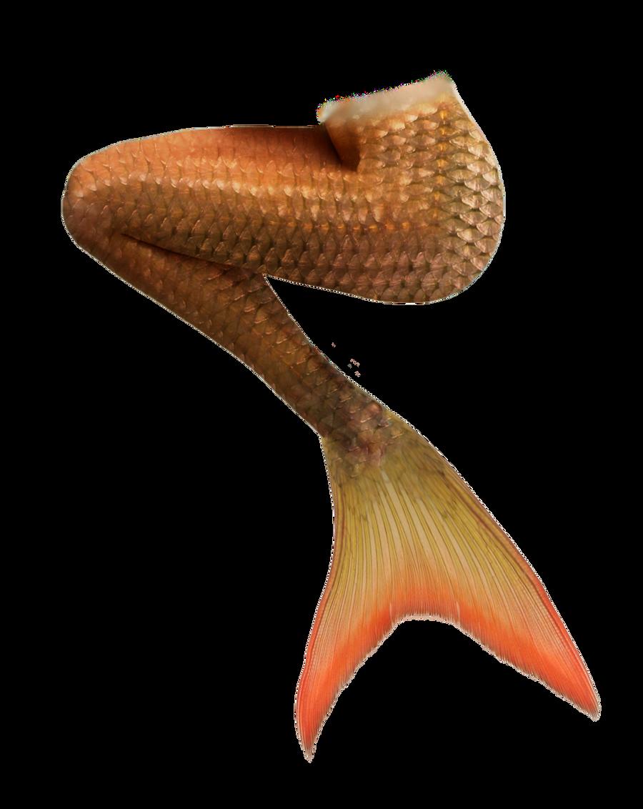 Mermaid Tail 12 (Orange)
