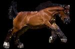 Stock Equitana 2013 95 By Fillyrox (Precut)