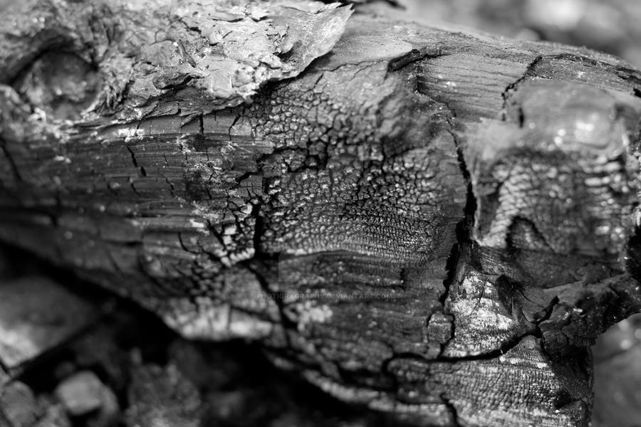 Smoked Wood