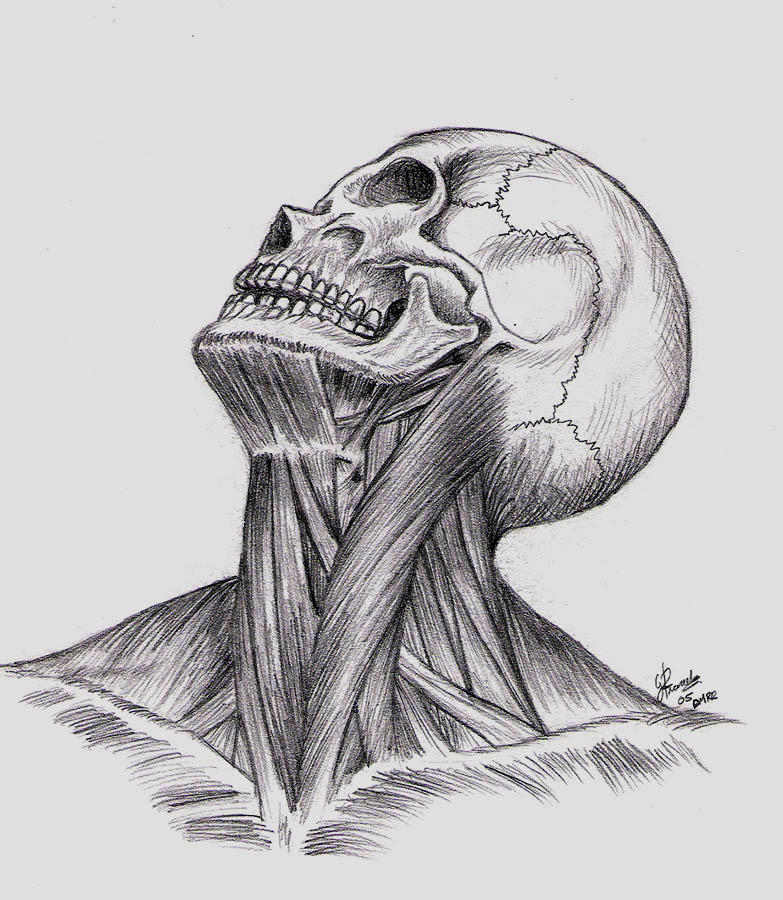 Anatomy by DblckLamb
