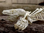 Mole Skeleton Closeup