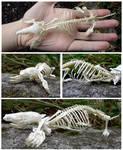 Mole Skeleton Complete