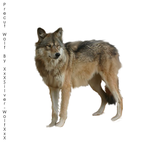 Precut Wolf1 by XxXSilver-WolfXxX