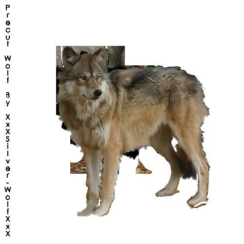 صور ذيب صور ذئاب سكرابز ذئاب صور ذيب مفرغة صور precut_wolf1_by_xxxsilver_wolfxxx-d4ggfa5.png