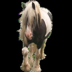 Precut Horse2