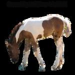 Precut Foal1