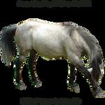 Precut Horse7
