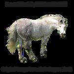 Horse Precut8