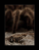 The Spider's Burrow 3
