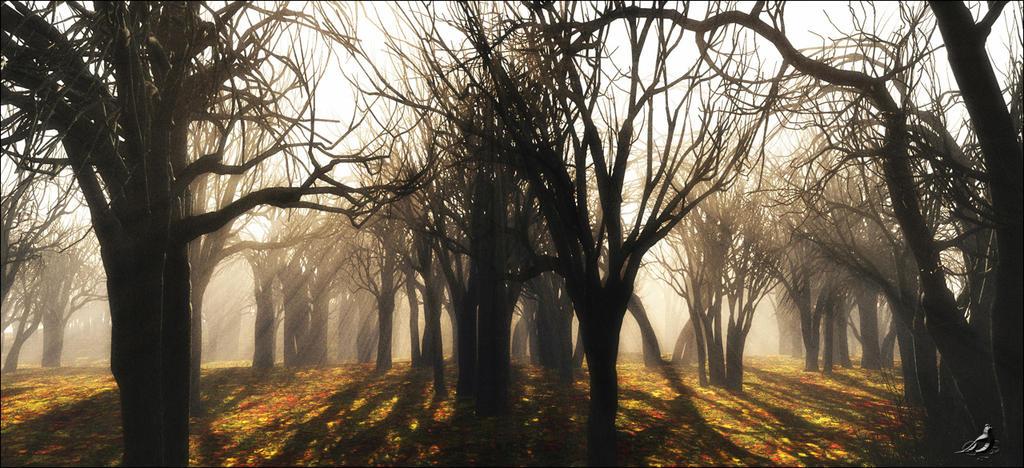Dead Forest by ubatuba74