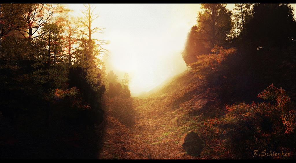 Forest Light by ubatuba74