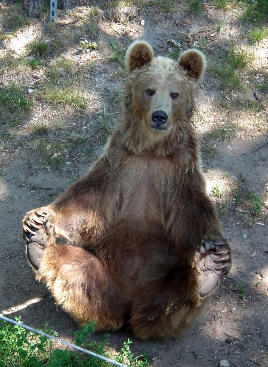 funny bear is funny by valvador d3i10a8