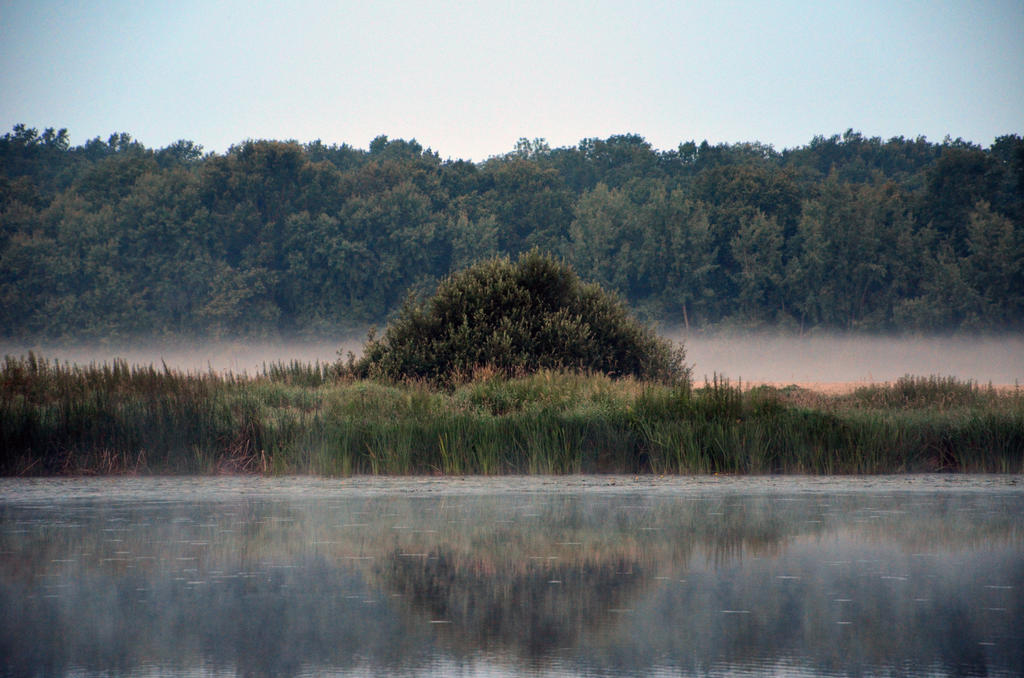 Misty Morning by Valvador