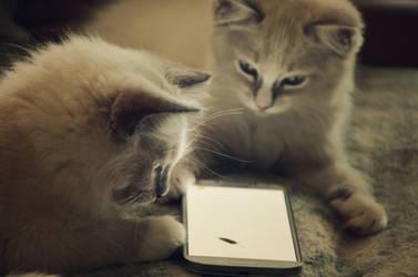 Digital Cats by Valvador