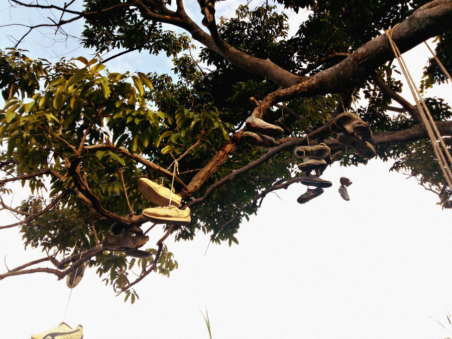 shoe tree by apy10