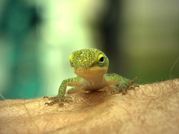 lizard 03 by o-shea