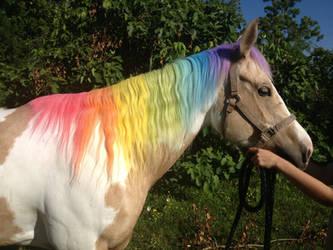 Rainbow Mane by o-shea
