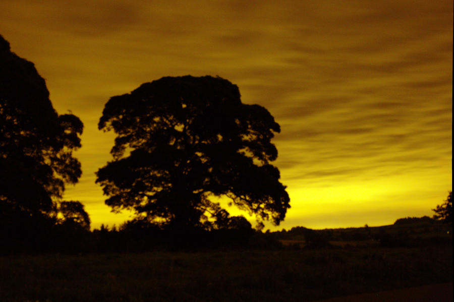 Night Oak by Steve-FraserUK
