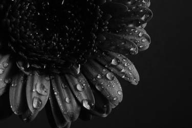 Black by Habter