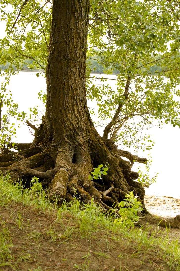 Tree trunk by alphirin on deviantart for Tree trunk art