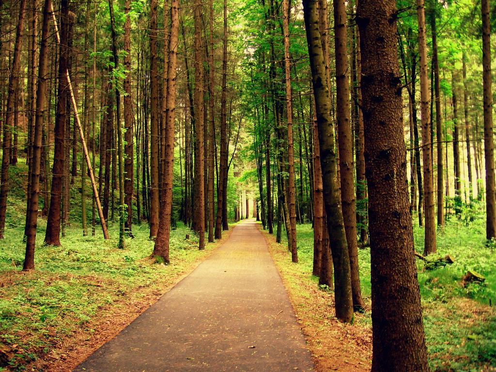 Forest by FreshWoosh