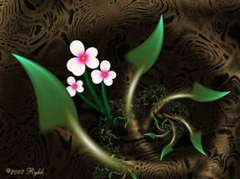 Bromelliad by Rykk