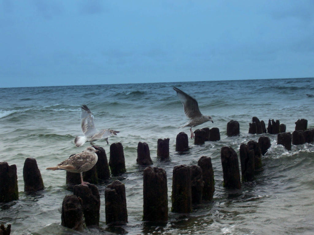Sea-gulls by tekla9