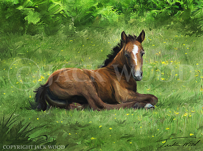 Resting Foal by Jack-Wood