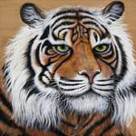 'Siberian Tiger' by skeegoedhart