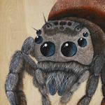 Jumping Spider by skeegoedhart