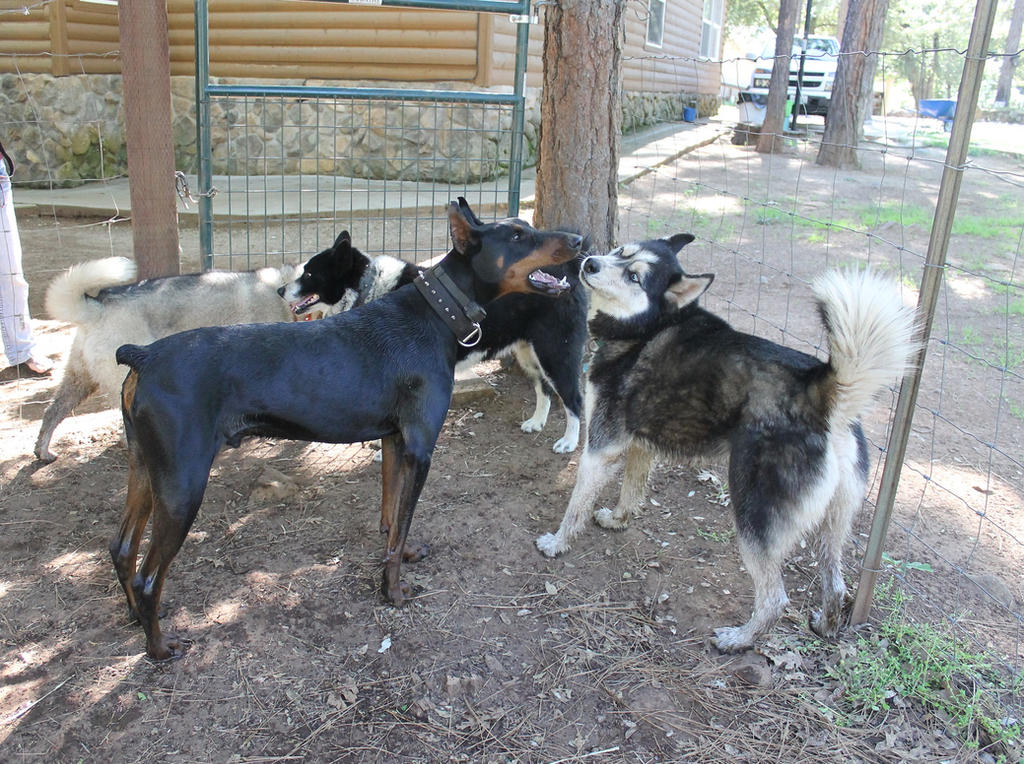 Mishka S Dog Owners Divorced