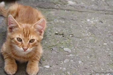 Ginger Garfield by XxXLipsOfAnAngelXxX