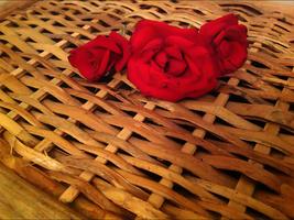 Innocent Roses by haze007