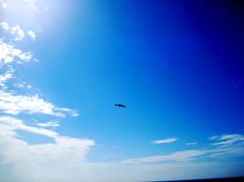 Eagle Above by haze007