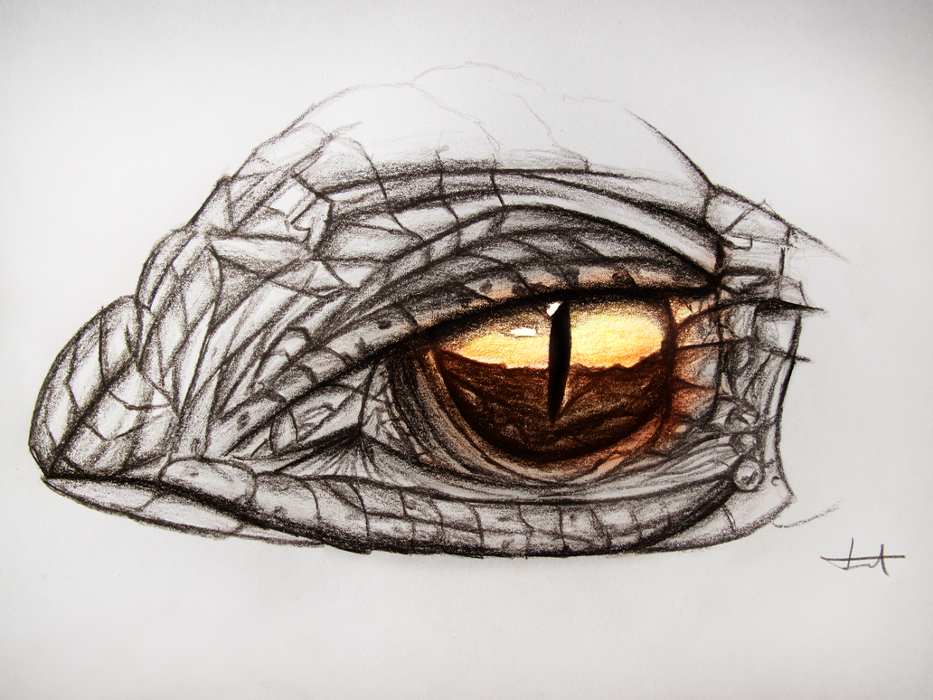 Dragon Eye  Drawing By MuuseDesign On DeviantArt