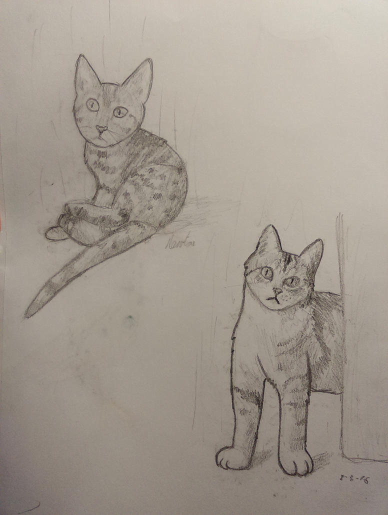 two cat sketches by equestriantardis on deviantart