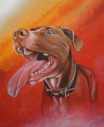Banned Pit Bull