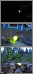 Glow worms.. by herrasus