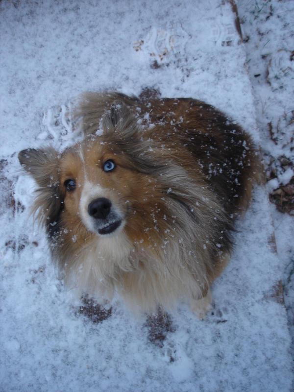 The snow is ah-mazing by Nighttttt