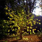 Autumn Glow by ToukoLovesArt
