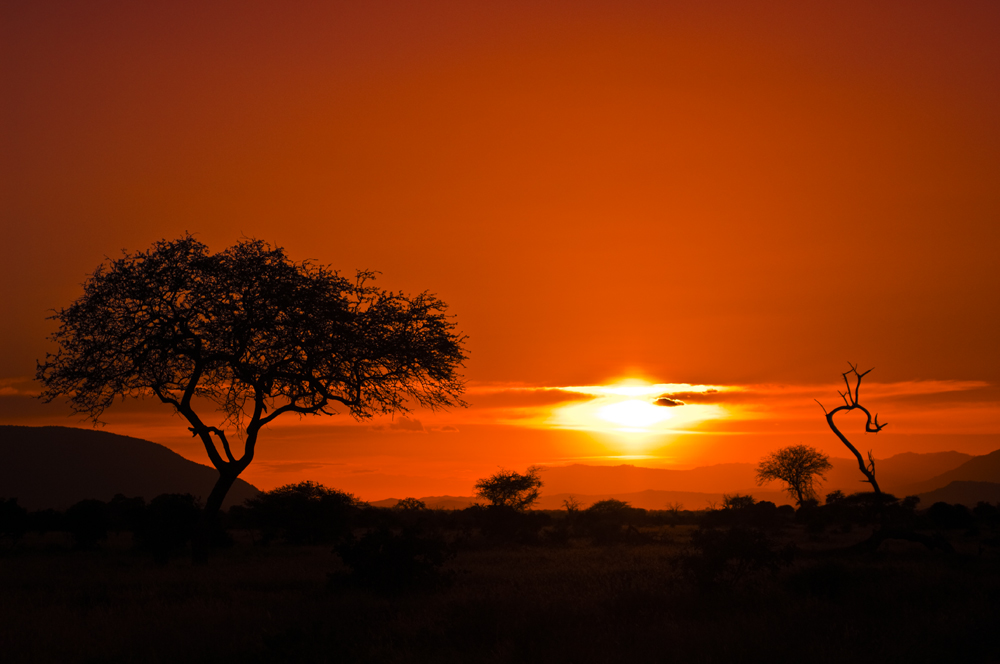 africa by flober81