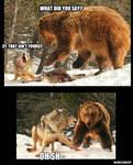 Wolf vs. Bear Meme
